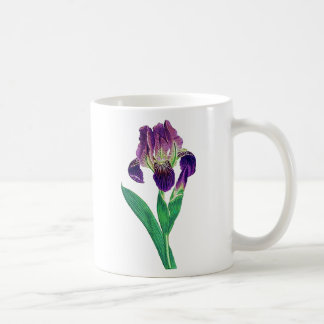 Lovely Purple Dutch Iris Coffee Mugs
