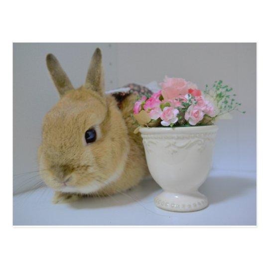 Lovely rabbit postcard