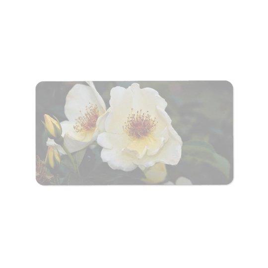 Lovely Shrub Rose 'Golden Wings' Address Label