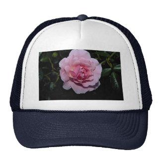 Lovely Shrub Rose 'Golden Wings' Trucker Hat
