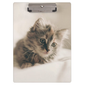Lovely Sweet Cat Kitten Kitty Clipboards