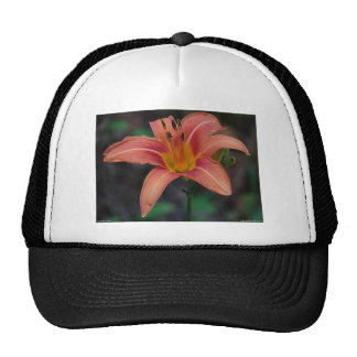 Lovely Tawny Daylily Apparel and Gifts Cap