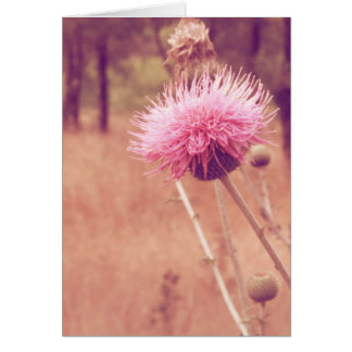 Lovely Thistle Nature Photo Blank Inside Card