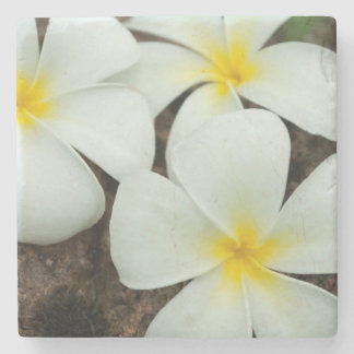 Lovely Tropical Blossoms In The South Pacific Stone Coaster
