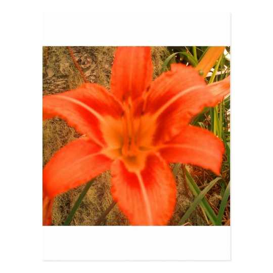 lovely tropical flower postcard
