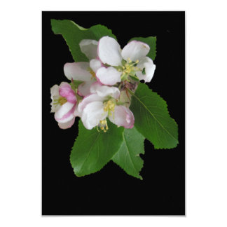 Lovely White Apple Blossoms on Card