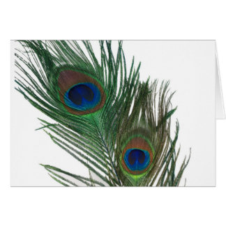 Lovely White Peacock Feather Card