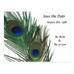 Lovely White Peacock Save the Date Post Card