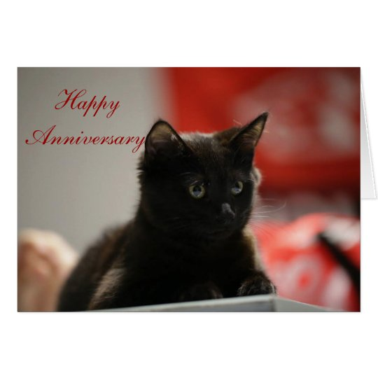 Loving Black Kitten Anniversary Card