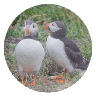 Loving Couple of Puffins Plate
