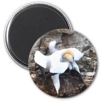 Loving Gannets Magnet