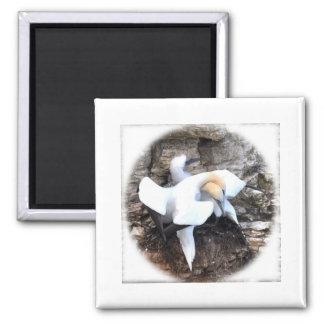 Loving Gannets Square Magnet