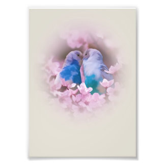 Loving Parakeets and Pink Flowers Art Photo