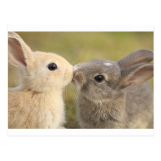 loving rabbit postcard