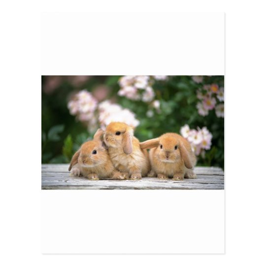 loving rabbits postcard