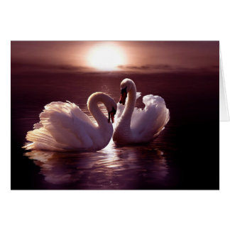 Loving Swans Forming a Heart Greeting Card