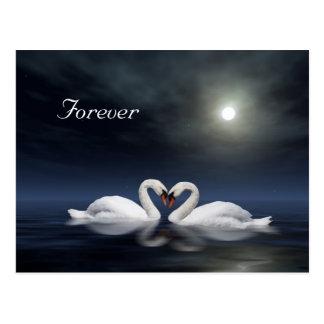 Loving swans postcard