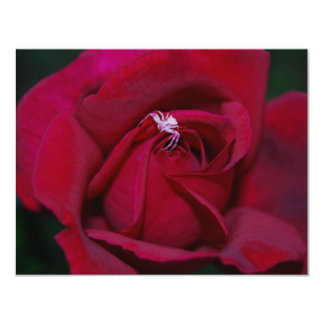 Loving the red rose and meaning 11 cm x 14 cm invitation card