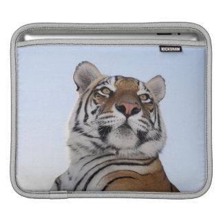 Low angle view of a Tiger (Panthera tigris) iPad Sleeve