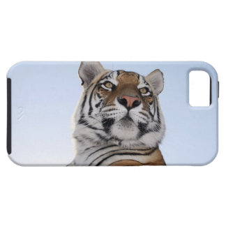 Low angle view of a Tiger (Panthera tigris) with Tough iPhone 5 Case