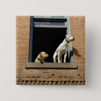 Low angle view of dogs in open window of brick 15 cm square badge