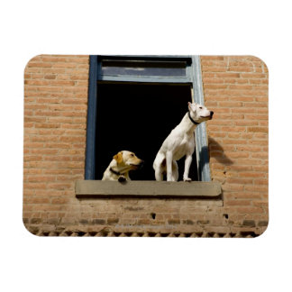 Low angle view of dogs in open window of brick rectangular photo magnet