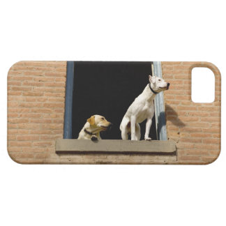 Low angle view of dogs in open window of brick iPhone 5 covers