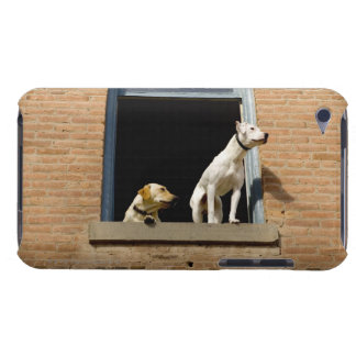 Low angle view of dogs in open window of brick iPod touch cover