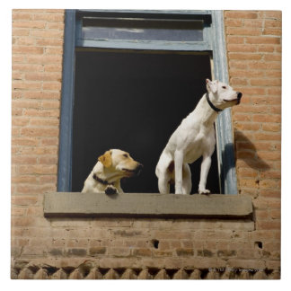 Low angle view of dogs in open window of brick large square tile