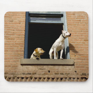 Low angle view of dogs in open window of brick mouse pad