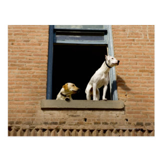 Low angle view of dogs in open window of brick postcard