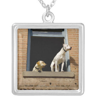 Low angle view of dogs in open window of brick silver plated necklace