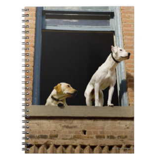 Low angle view of dogs in open window of brick spiral notebook