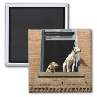 Low angle view of dogs in open window of brick square magnet
