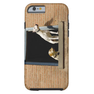 Low angle view of dogs in open window of brick tough iPhone 6 case