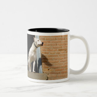 Low angle view of dogs in open window of brick Two-Tone coffee mug