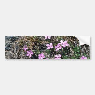 Low Growing Pink Wildflowers flowers Bumper Sticker