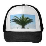Low Palm Tree Hat