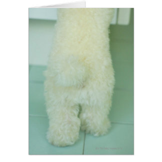 Low section view of a miniature poodle card