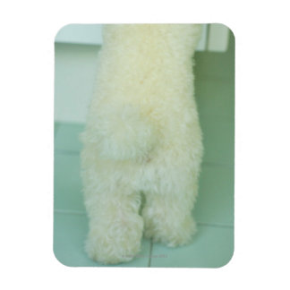Low section view of a miniature poodle magnets