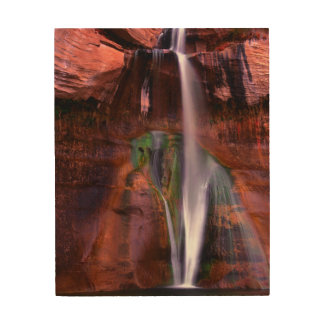 Lower Calf Splashes Down In Grand Wood Canvases