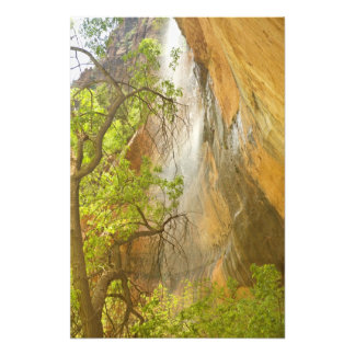 Lower Emerald Pool Waterfall Red rock and Tree Photograph