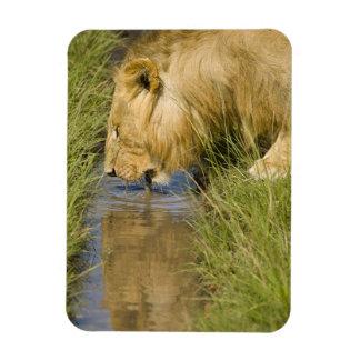 Lower Mara, Masai Mara Game Reserve, Kenya, Rectangle Magnets
