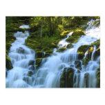 Lower Proxy Falls Oregon Postcard