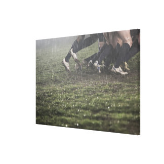 Lower section of rugby player in scrum, pushing gallery wrap canvas