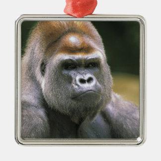 Lowland gorilla. Gorilla Gorilla. Silver-Colored Square Decoration