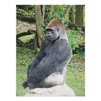 Lowland Gorilla in Sitting Pose Print