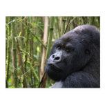 Lowland Gorilla Postcard