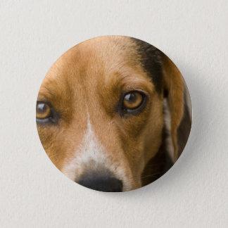Loyal Beagle Hound Hunting Dog 6 Cm Round Badge