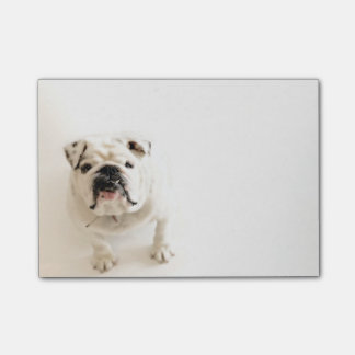 Loyal White Bulldog Photograph Post-it Notes